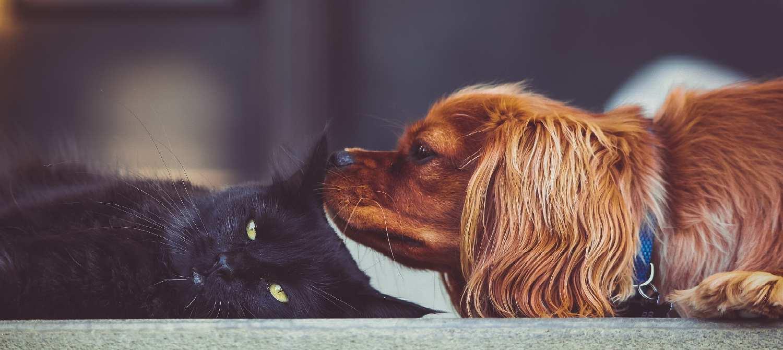 Haustierhaltung In Der Mietwohnung Was Ist Erlaubt Mieterengel