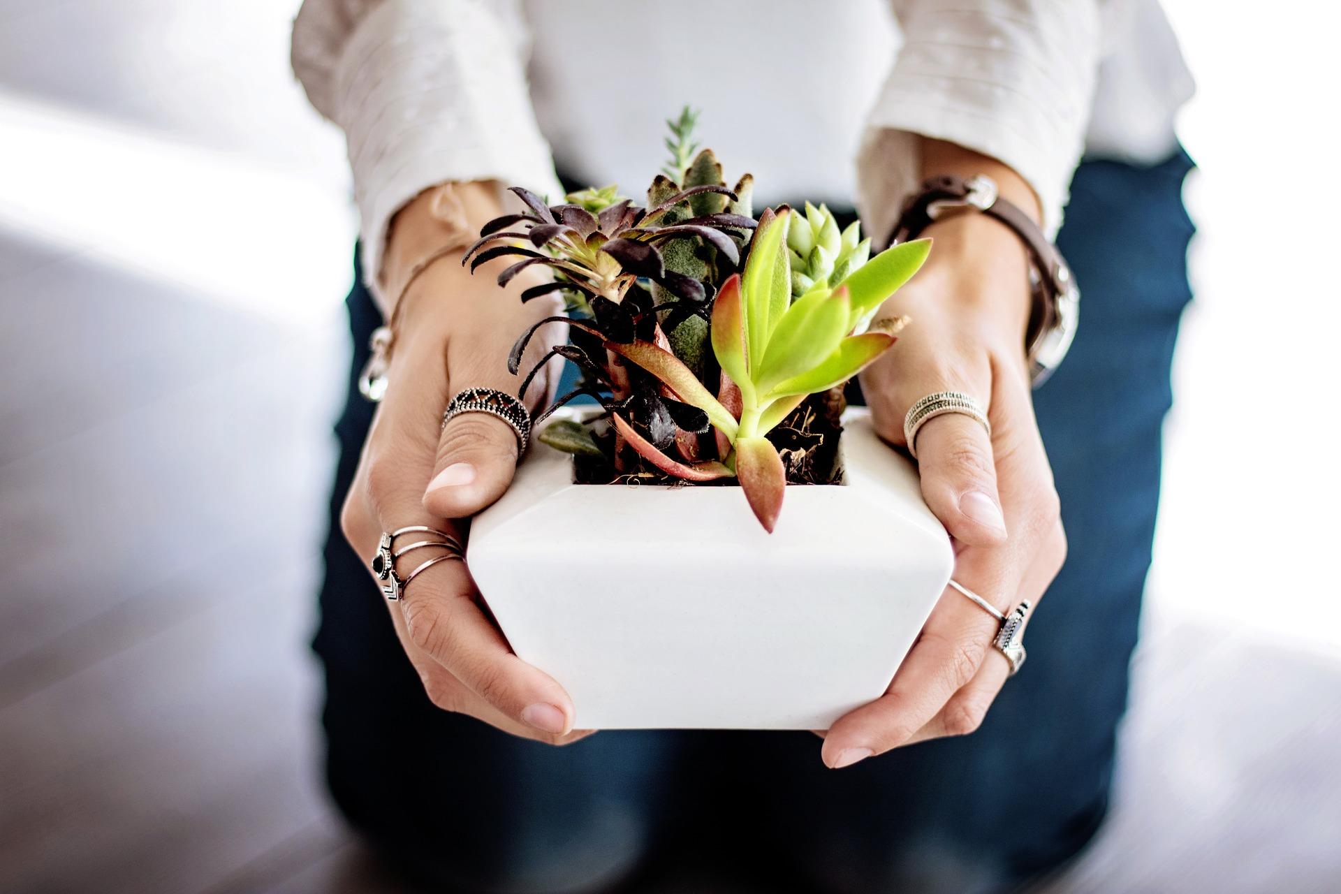Mieterengel 3 Exotische Zimmerpflanzen Wunderwesen Die Deine