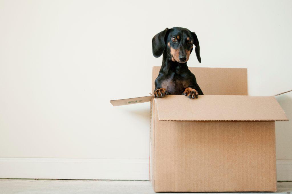 umzug die wichtigsten antworten f r mieter. Black Bedroom Furniture Sets. Home Design Ideas
